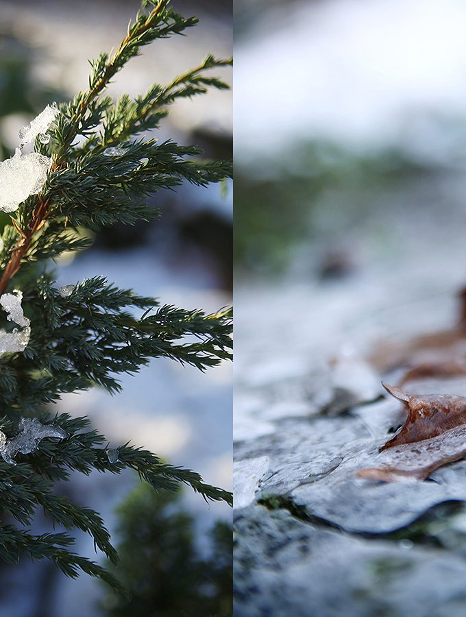 {Photography} Schneeflöckchen, Weißröckchen…