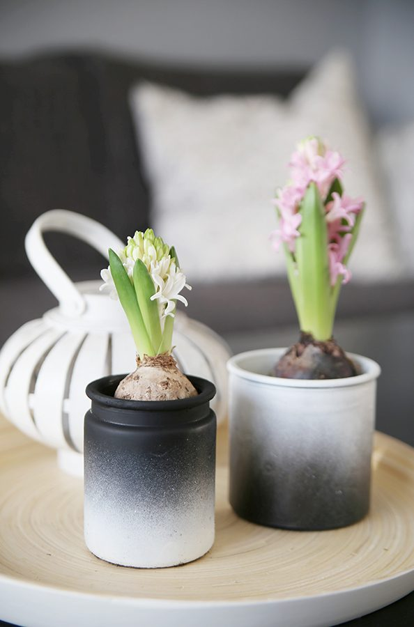 DIY: Frühlingsblümchen im DipDye-Topf