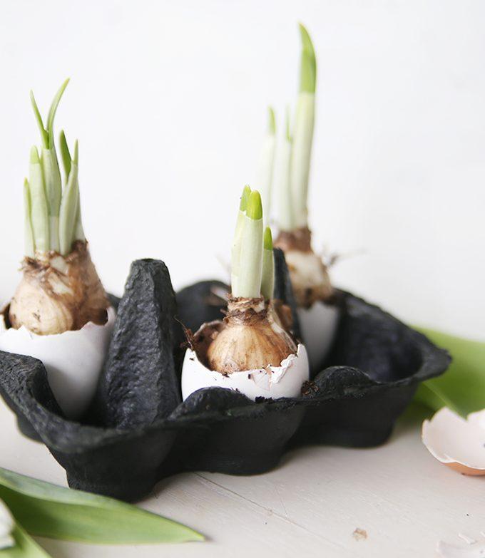 {DIY} Osterdeko in zwei Varianten: mit Blumenzwiebeln und Kakteen