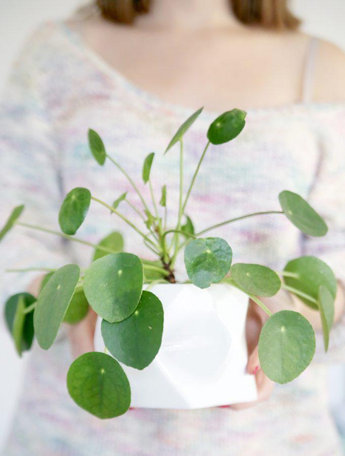 {Plantlove} Pilea vermehren
