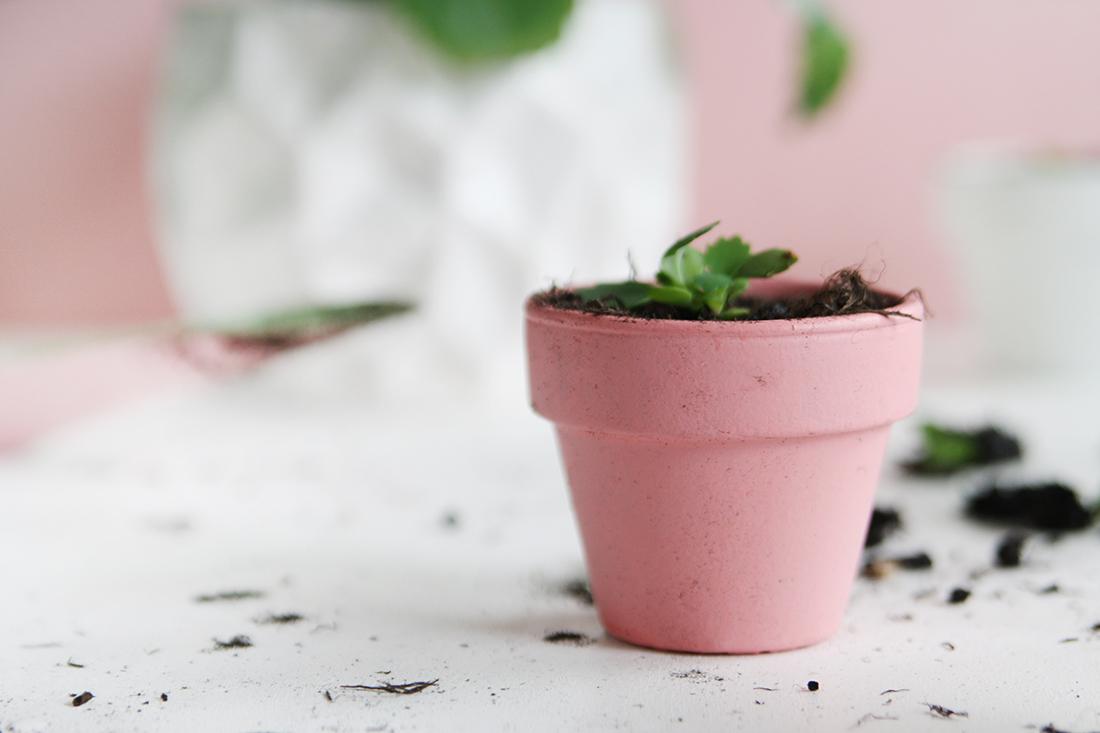 Brutblatt vermehren: Meine Tipps