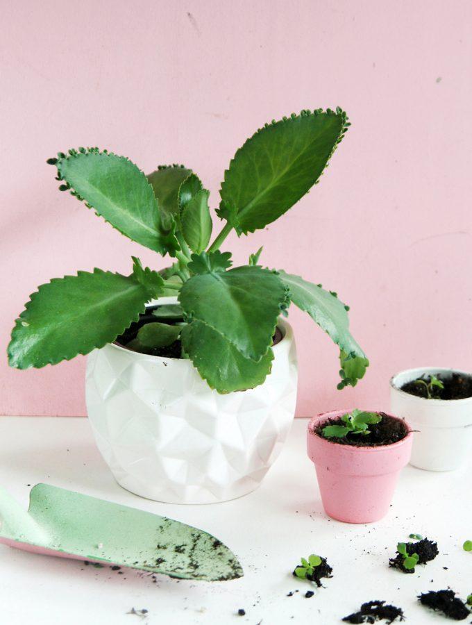 DIY Pflanzenliebe: Brutblatt vermehren & Pflegetipps🌱